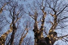 Illuminated tree Stock Photos