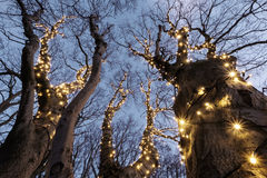 Illuminated tree Royalty Free Stock Image