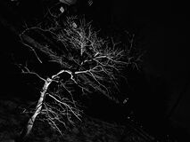 Illuminated tree at night Stock Images