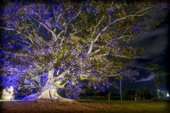 Illuminated Tree Outside Of Emerald Lakes Royalty Free Stock Photos