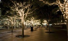 Illuminated trees Royalty Free Stock Photography