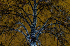 Illuminated trees Royalty Free Stock Images