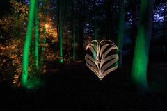 Illuminated trees in forest at night Stock Photo