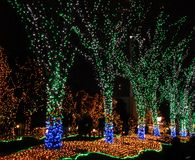 Illuminated trees Stock Image