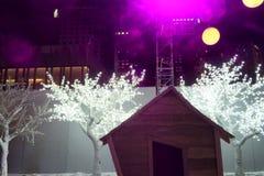 Illuminated trees scene Royalty Free Stock Photo