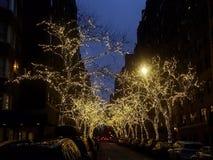 Illuminated trees on tree lined street at dusk royalty free stock images