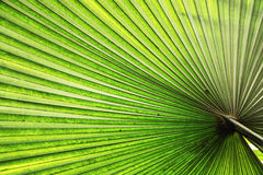 Illuminated tropical palm leaf Royalty Free Stock Images