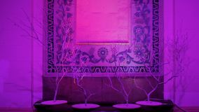 Illuminated wall with unusual decor in oriental style, eastern culture, hotel. Stock footage stock video