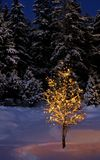 Illuminated winter tree Royalty Free Stock Photo