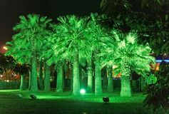 Illumination de nuit en parc ville de la Riviera, Sotchi Photo stock