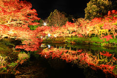 Illumination at Nabana no Sato,Mie,Japan,with attractive autumn leaves royalty free stock photos