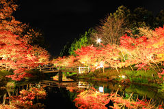 Illumination at Nabana no Sato,Mie,Japan,with attractive autumn leaves. Famous for winter illumination in Japan Stock Images
