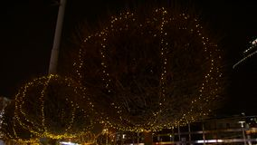 Illumination sur des arbres clips vidéos