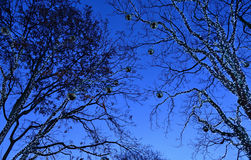 Illumination of trees for Christmas Royalty Free Stock Images