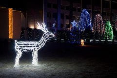 Illumination white deer Royalty Free Stock Photography