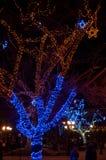 Illuminazione di inverno in un parco Immagine Stock Libera da Diritti