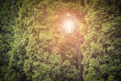 Illuminazione di notte del parco della via Immagine Stock Libera da Diritti