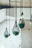 Illuminazione verde di concetto delle lampade a sospensione per la casa Fotografia Stock