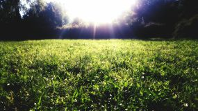 Illumine grass. Summer Royalty Free Stock Image