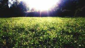 Illumine la hierba Imagen de archivo libre de regalías