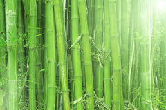 Illumini il bambù Immagini Stock Libere da Diritti