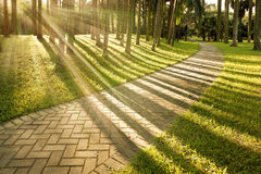 Illumini il tramonto degli alberi fotografia stock libera da diritti