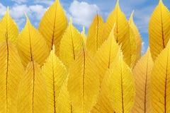 Illusie van bos - samenstelling van gele bladeren Royalty-vrije Stock Afbeeldingen