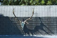 Elk Skull on Cabin Stock Photo