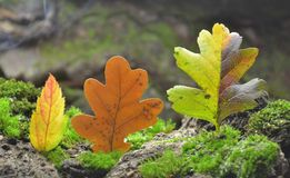Forest Illusion abstract  composition of autumn leaves. Royalty Free Stock Photo