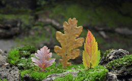 Forest Illusion abstract  composition of autumn leaves. Royalty Free Stock Images
