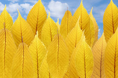 Illusion of forest - composition of yellow leaves. Composition of autumn leaves - illusion of forest royalty free stock images