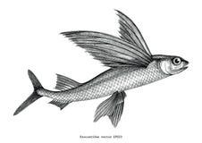 Illust för gravyr för tappning för teckning för exocoetidae- eller flygfiskhand stock illustrationer