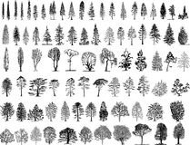 Illustartion de los árboles stock de ilustración