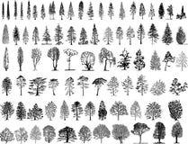 Illustartion degli alberi Fotografia Stock