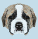 Illustated Portrait of St. Bernard Dog Royalty Free Stock Photography