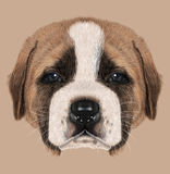 Illustated Portrait of St. Bernard Dog Royalty Free Stock Image