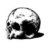 Illustation del cráneo Imagen de archivo libre de regalías