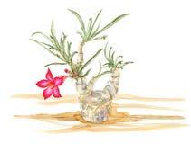 Illusteation della pianta di deserto Fotografia Stock Libera da Diritti