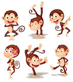 Monkey series Royalty Free Stock Image