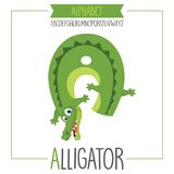 Illustrated Alphabet Letter A And Alligator Stock Image