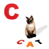 Illustrated alphabet letter C and cat. Stock Photography