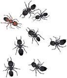 Illustrated ants Royalty Free Stock Photography