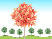 Illustrated autumn maple Royalty Free Stock Image