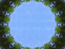 Illustration Blue Sky View from Jungle Tree Tunnel Royalty Free Stock Photography