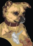 Chihuahua dog. Illustrated chihuahua dog on the black background Royalty Free Stock Image