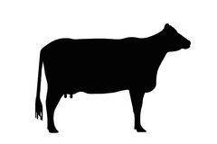 Illustrated cow sign Royalty Free Stock Photos