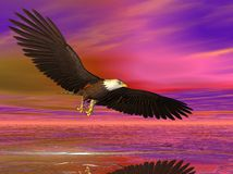 Illustrated Eagle. Illustrated bald eagle flying over the sea Stock Image