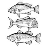 Illustrated Fish Royalty Free Stock Images