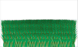 Illustrated grass on white background Royalty Free Stock Photos