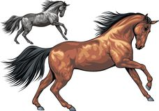 Illustrated horse Royalty Free Stock Image